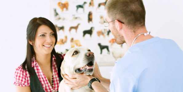 veterinarian, inspecting dog, Goshen Animal Clinic