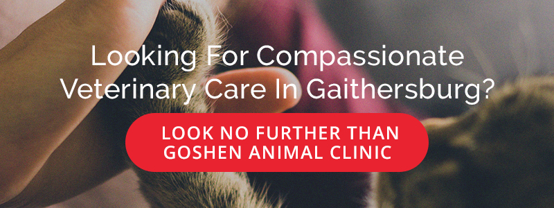 Looking for Compassionate Veterinary Care in Gaithersburg