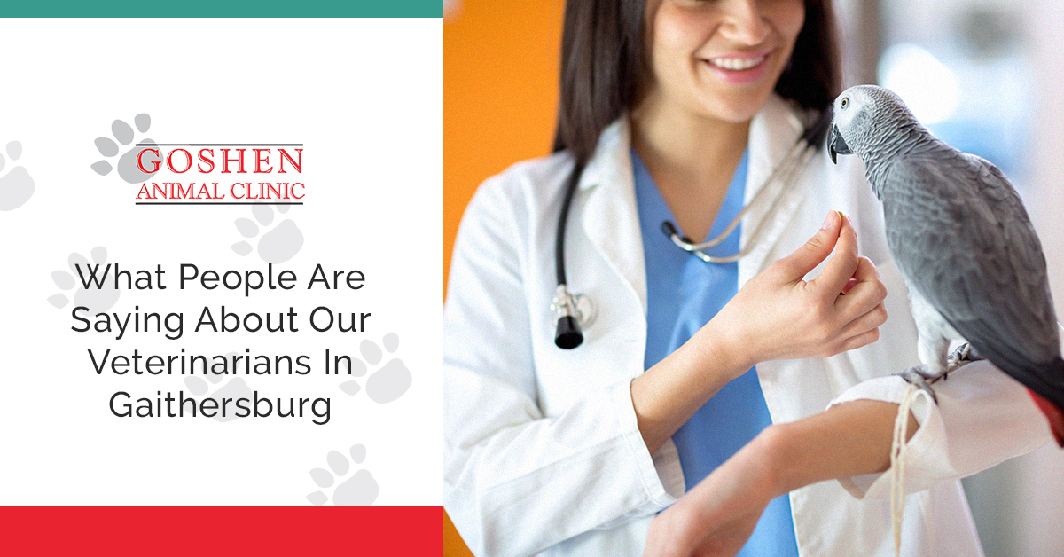What People Are Saying About Our Veterinarians In Gaithersburg