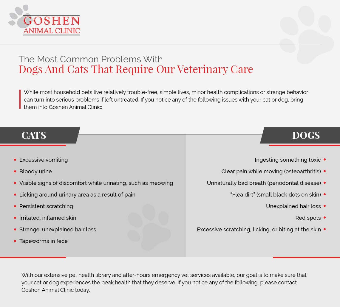 Veterinarians Gaithersburg: Taking Your Cat Or Dog To Our Local
